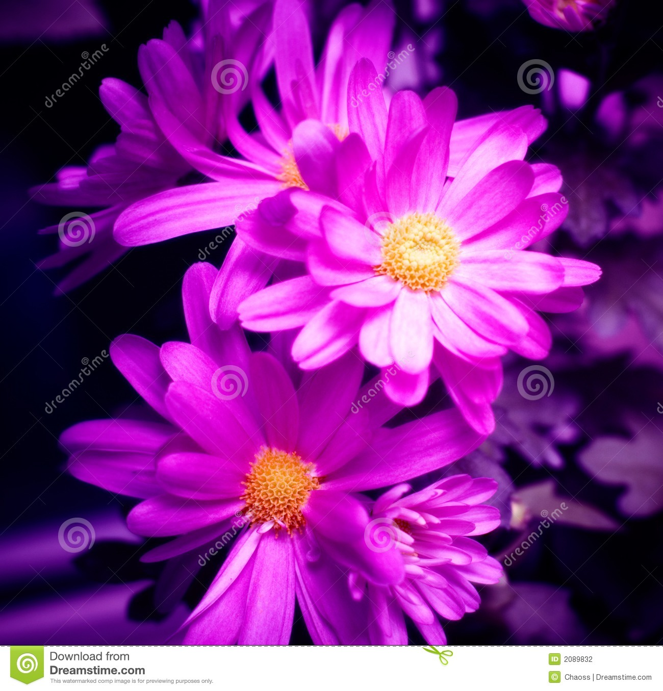 purple flowers stock photography  image, Beautiful flower