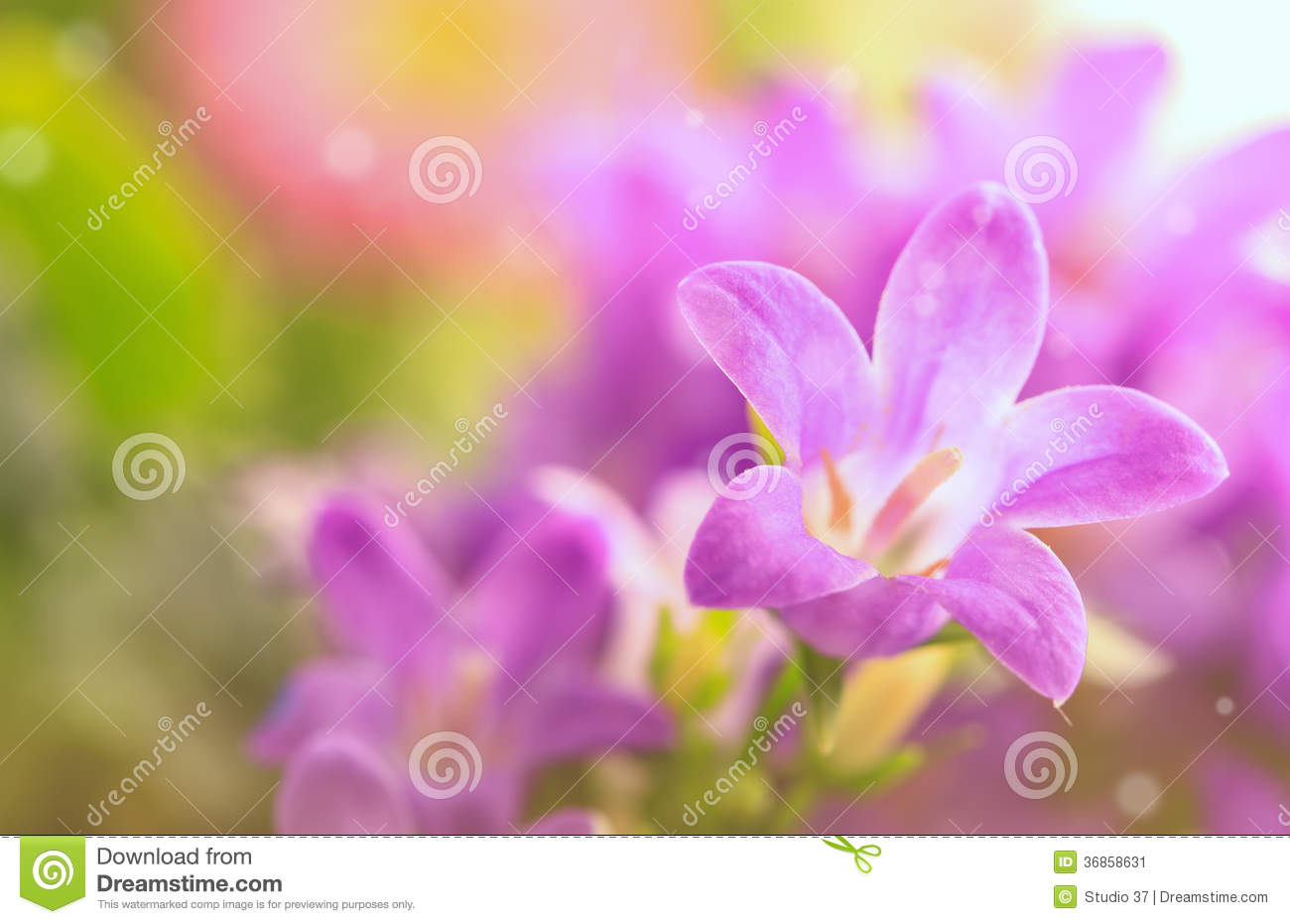 Flower Background Real Photographs Of Beautiful Flowers