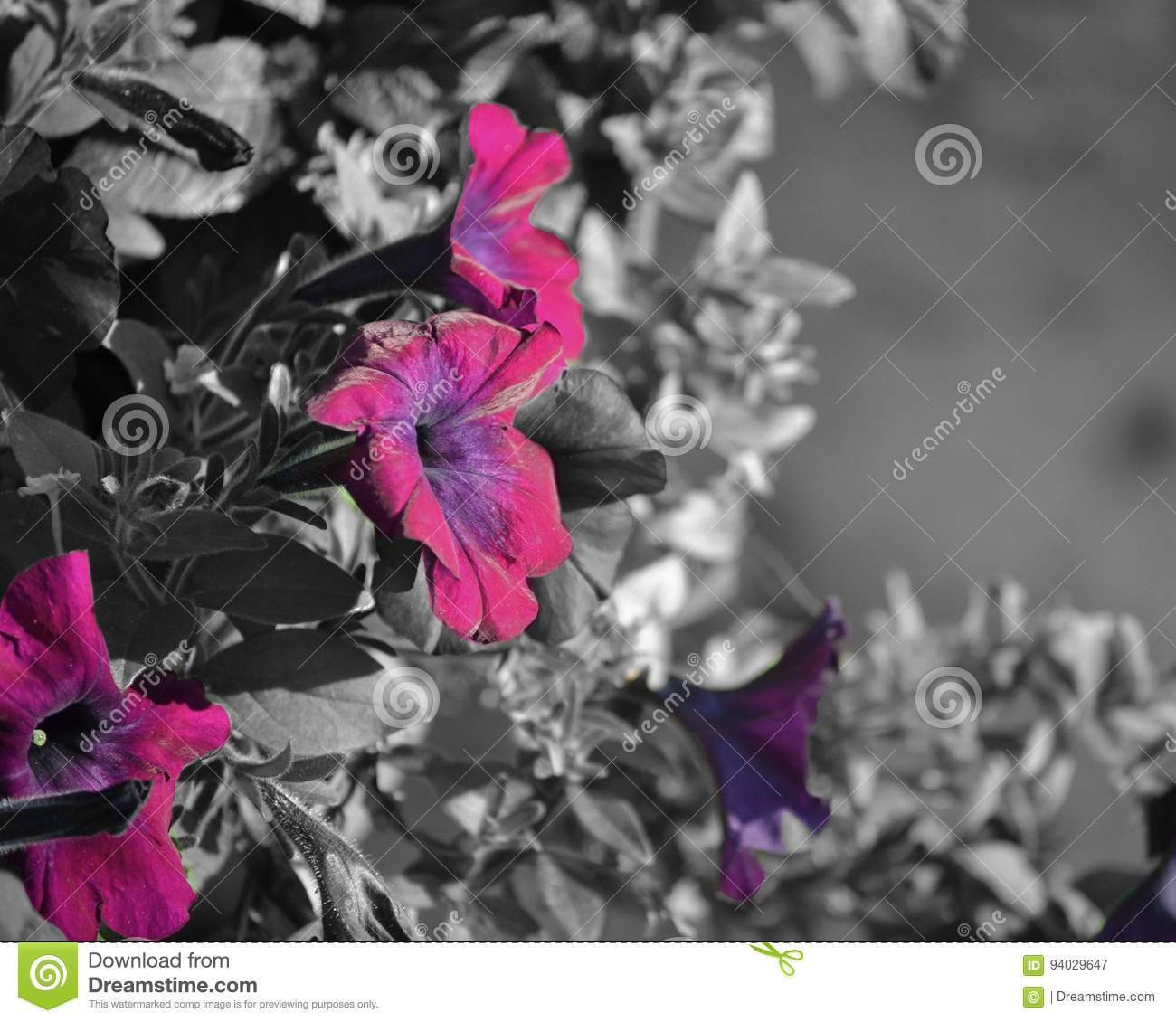 Download purple flowers stock image image of purple color flowers 94029647