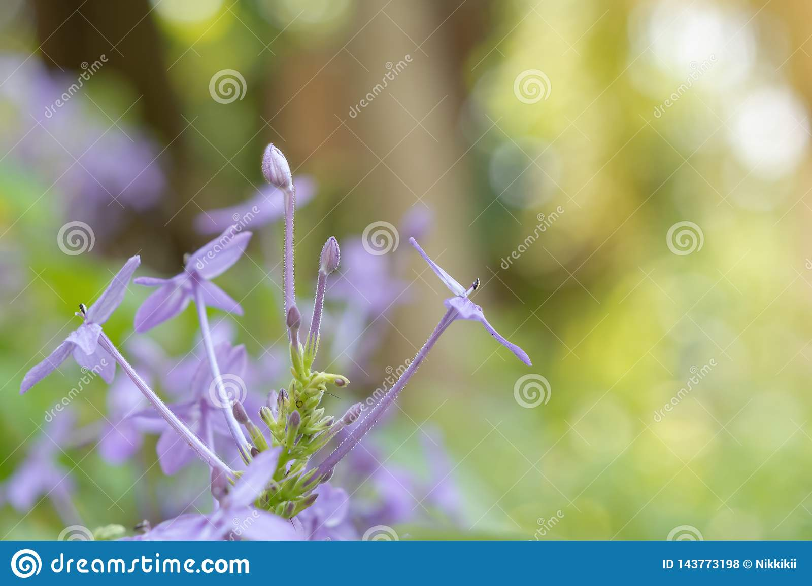 Purple flowers on bokeh and blurred backgrounds