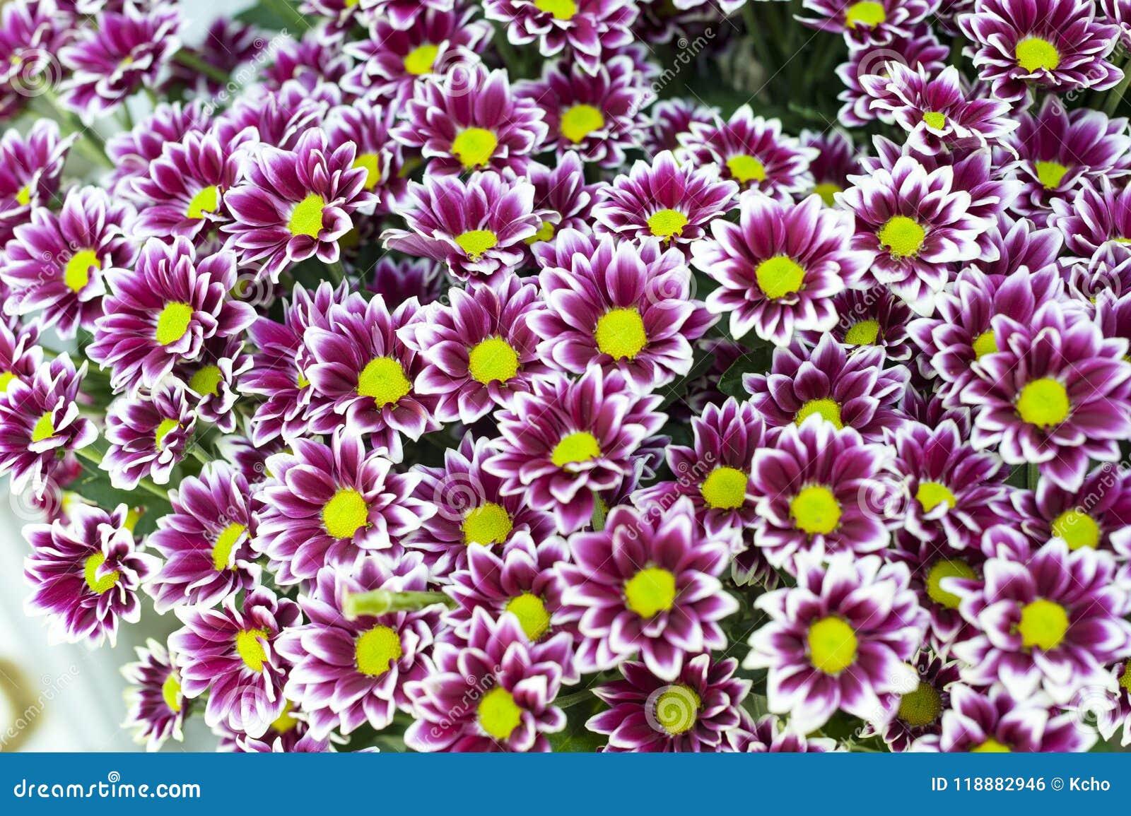Purple Flowers Bunch Stock Photo Image Of Flowers Farm 118882946