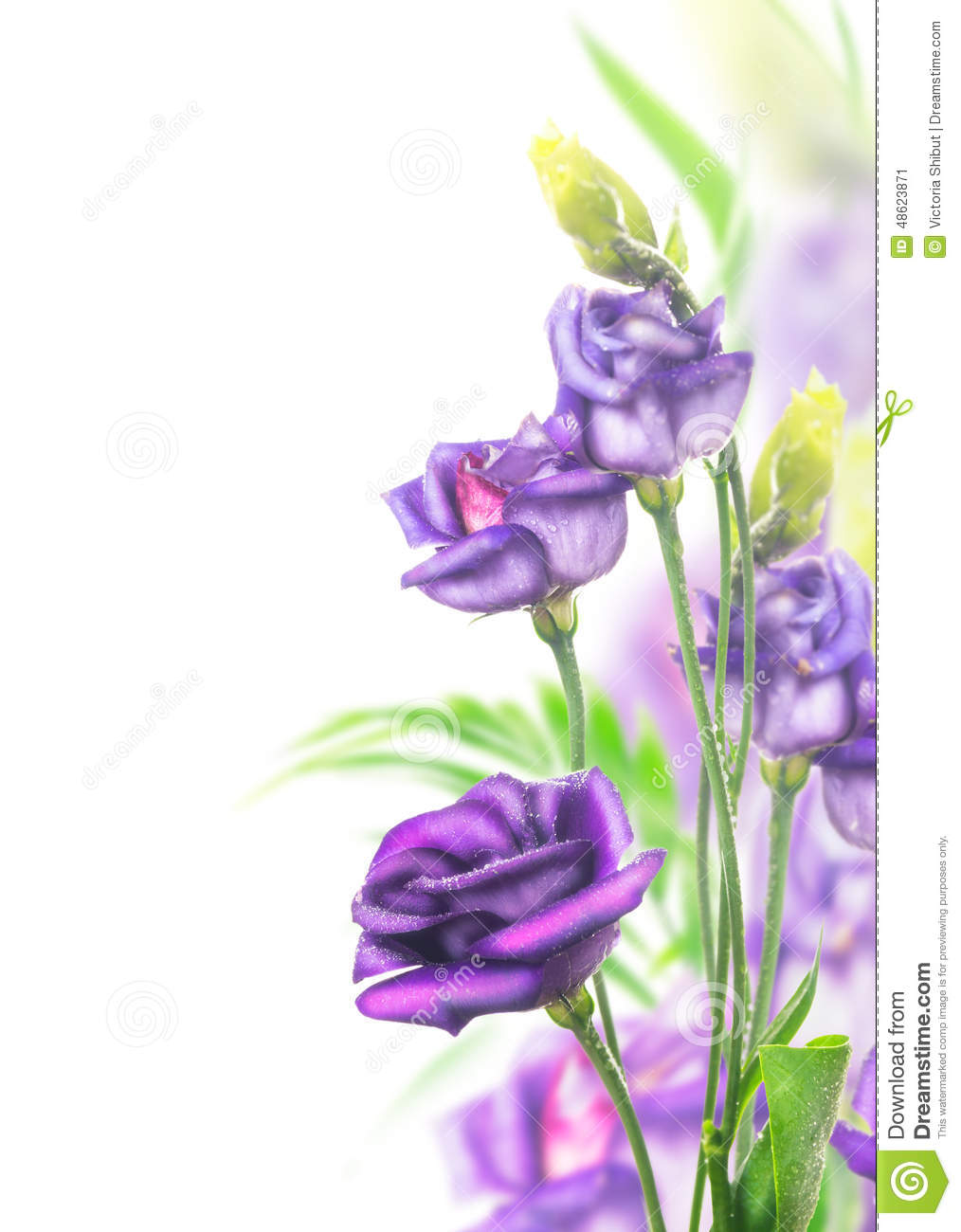 Purple Flowers Bunch On White Background Stock Image Roses