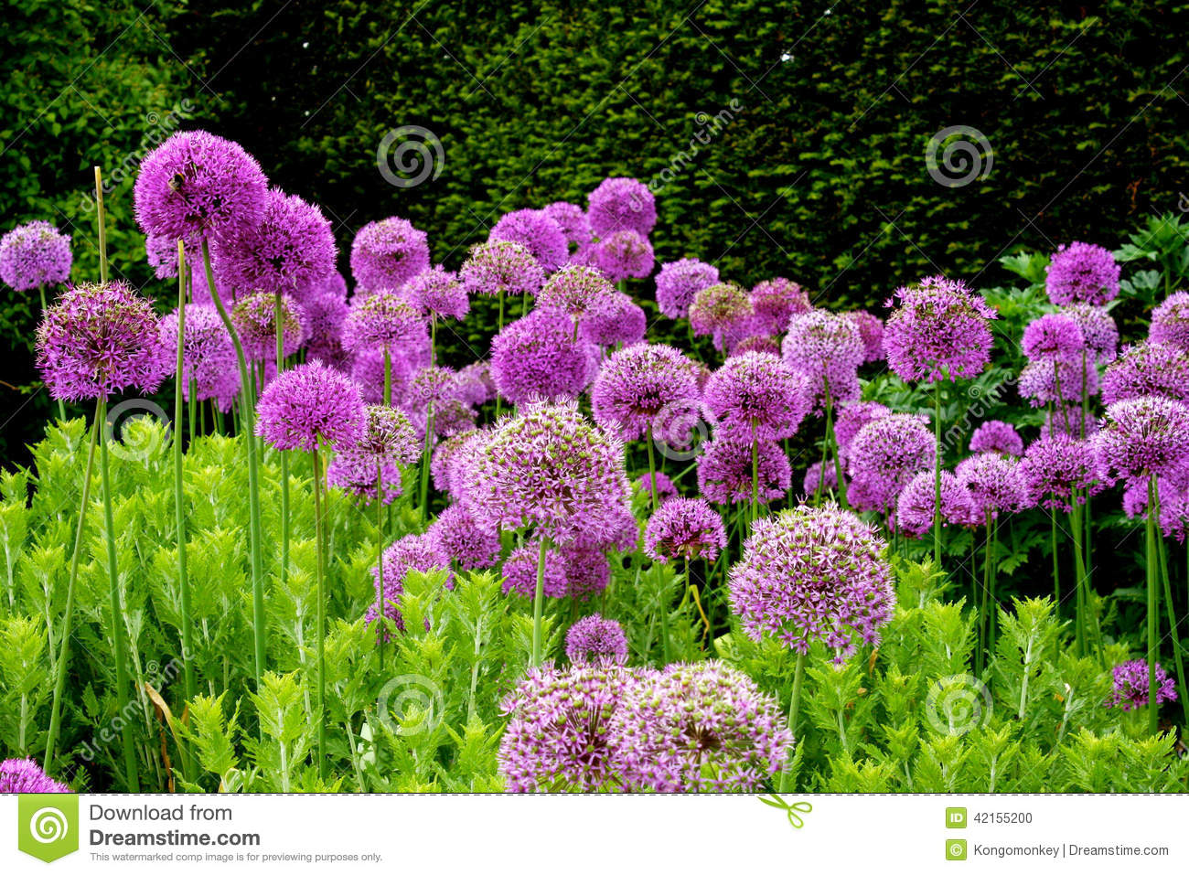 Purple Flowers In An English Garden