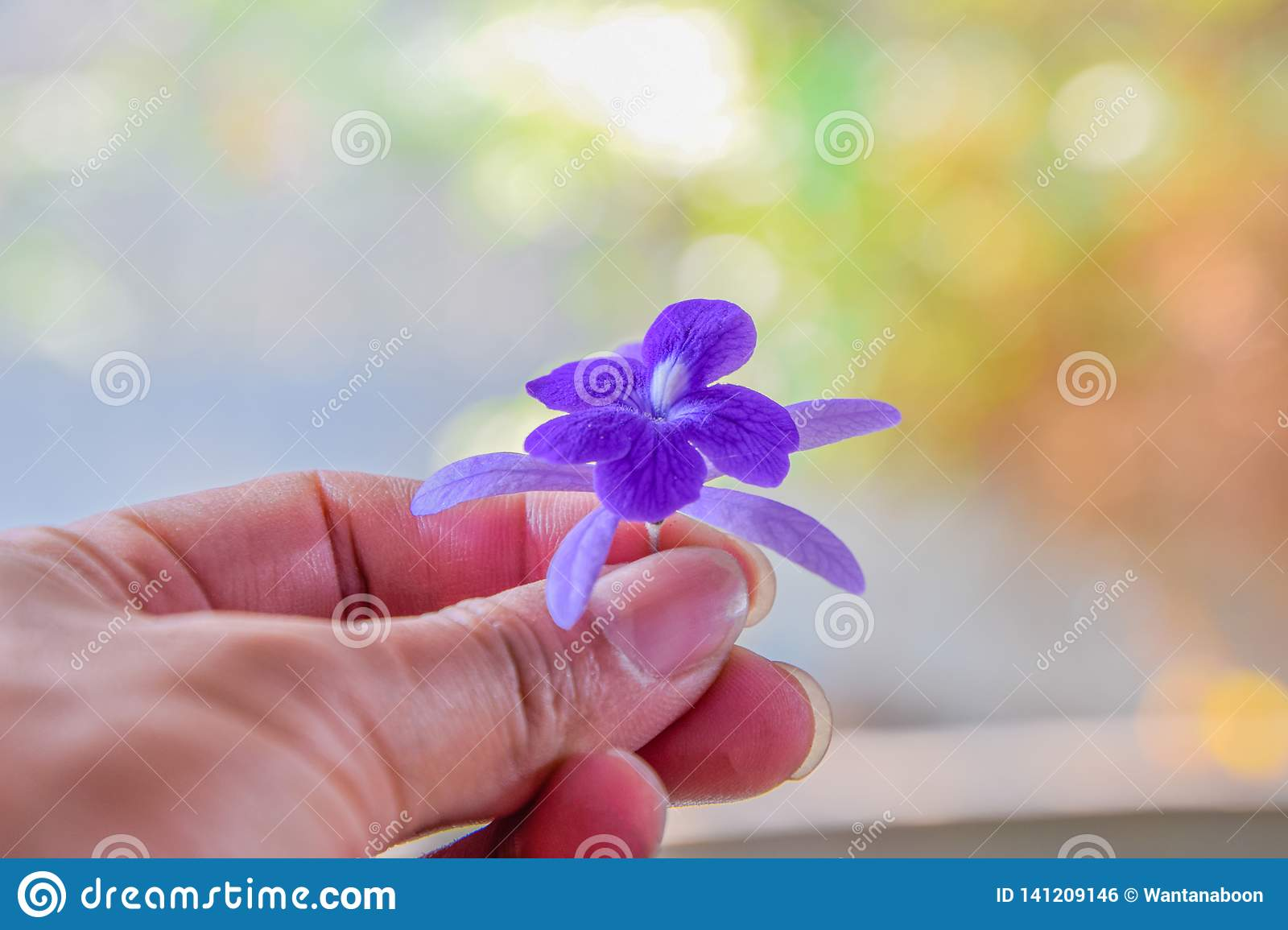 Purple flowers in hand, Give flowers to you