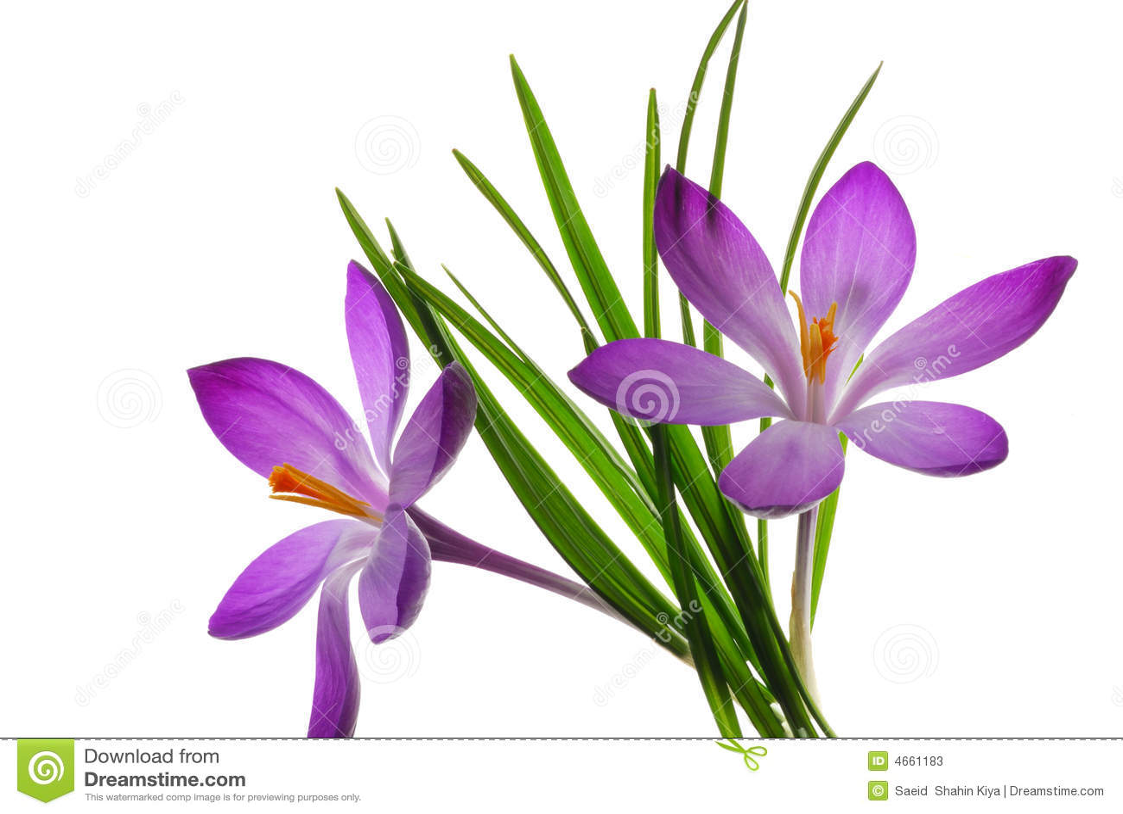 Purple flowers and leaves