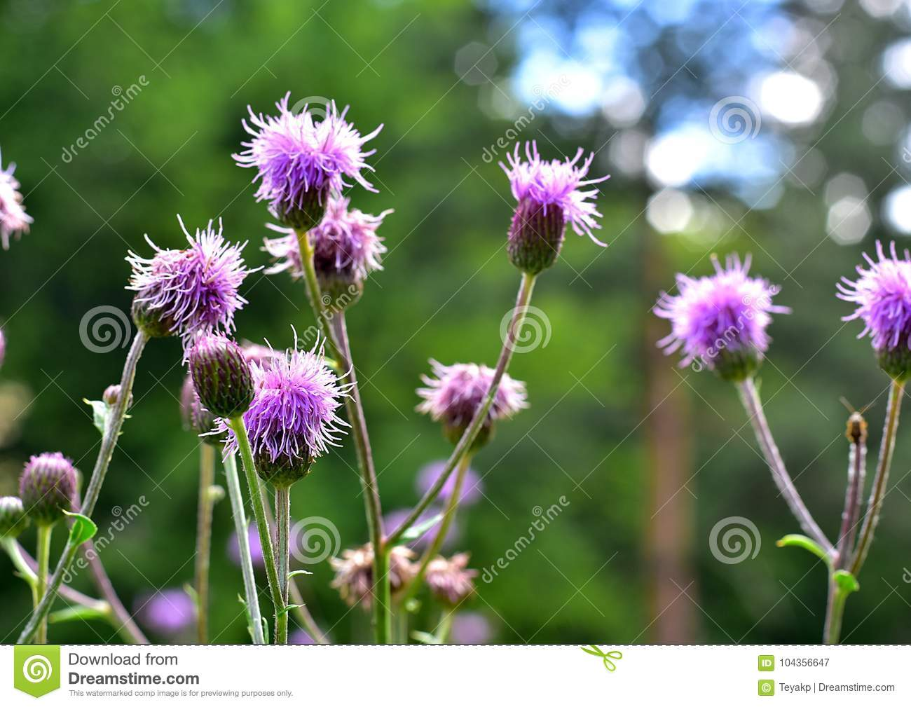 Purple flowers with natural blurred background