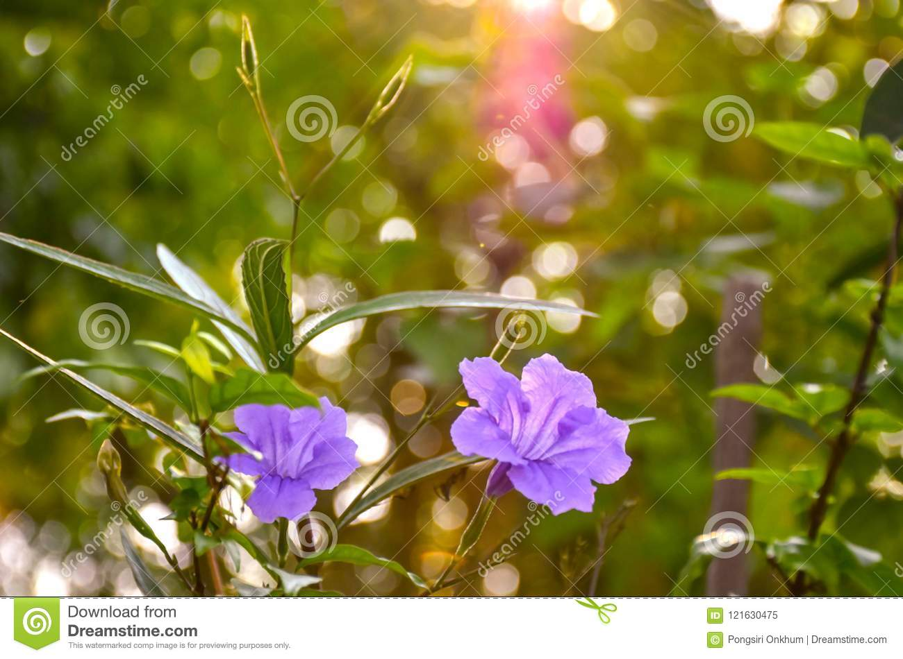 Purple Flowers On Bokeh Background Stock Image Image Of Flowers