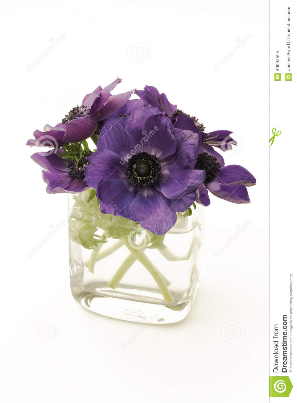 Purple flowers in a vase on white background stock image image purple flowers in a vase on white background floridaeventfo Images