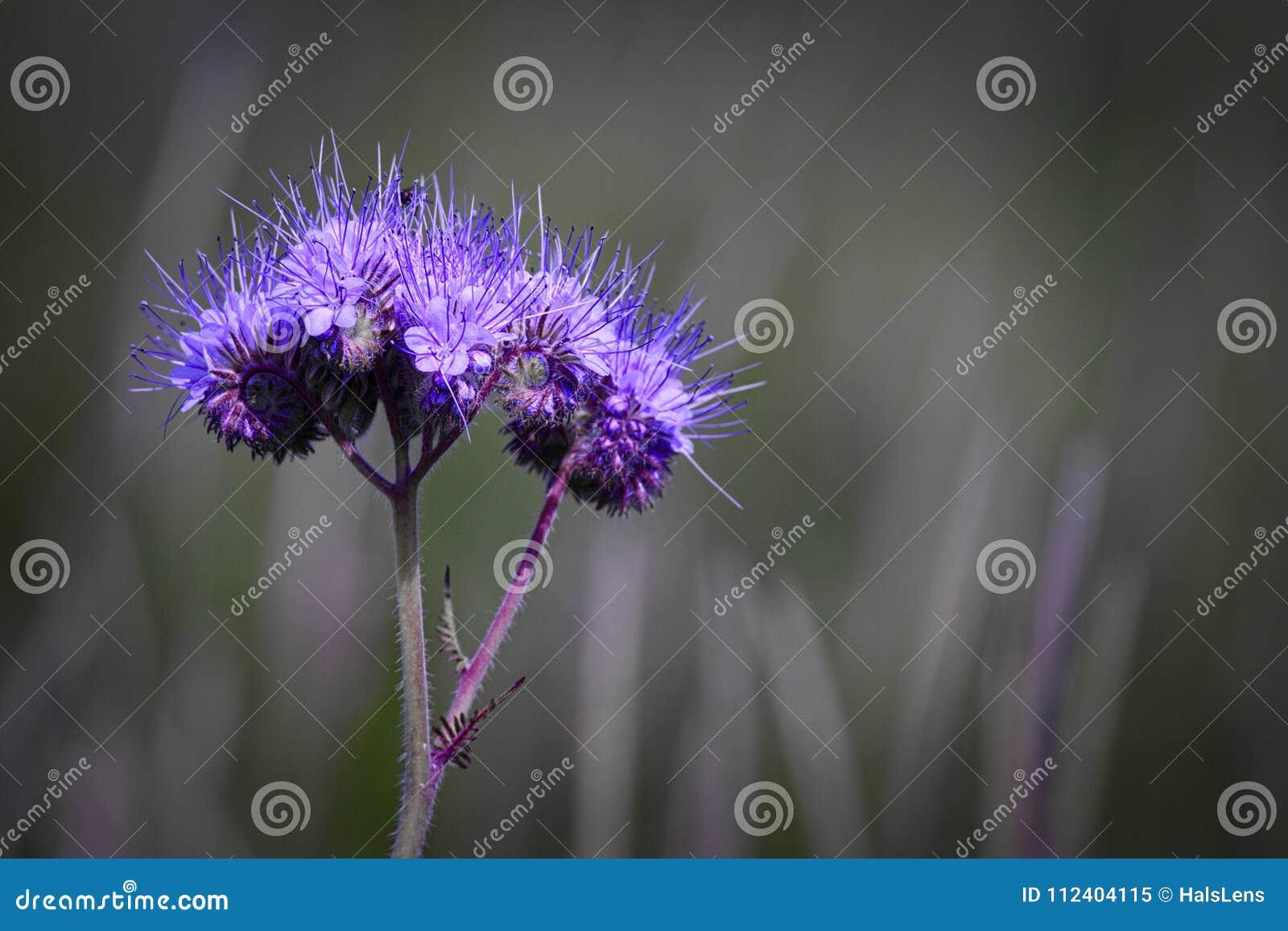 Purple Fluorescent flower