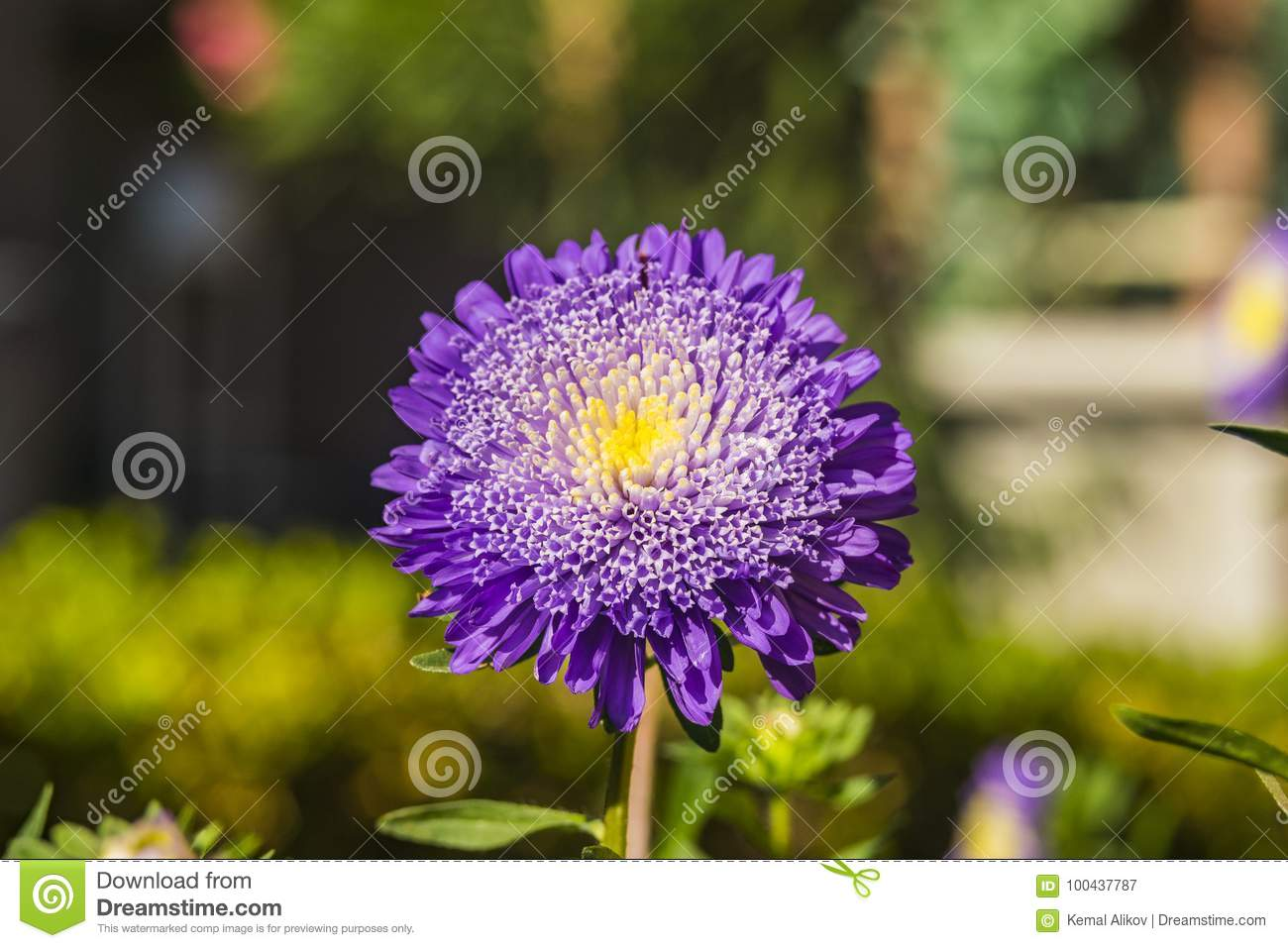 Beautiful Purple Flower With Bokeh Stock Image Image Of Beautiful