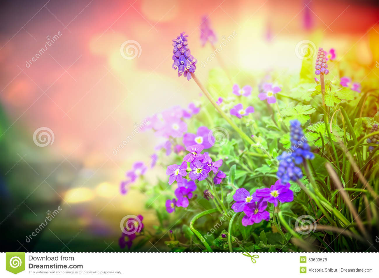 Garden Flowers purple garden flowers in back light on blurred nature background