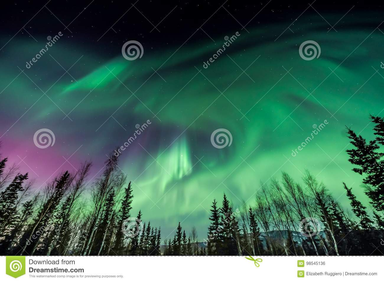 Purple and green Aurora borealis swirling over silhouetted trees in Alaska