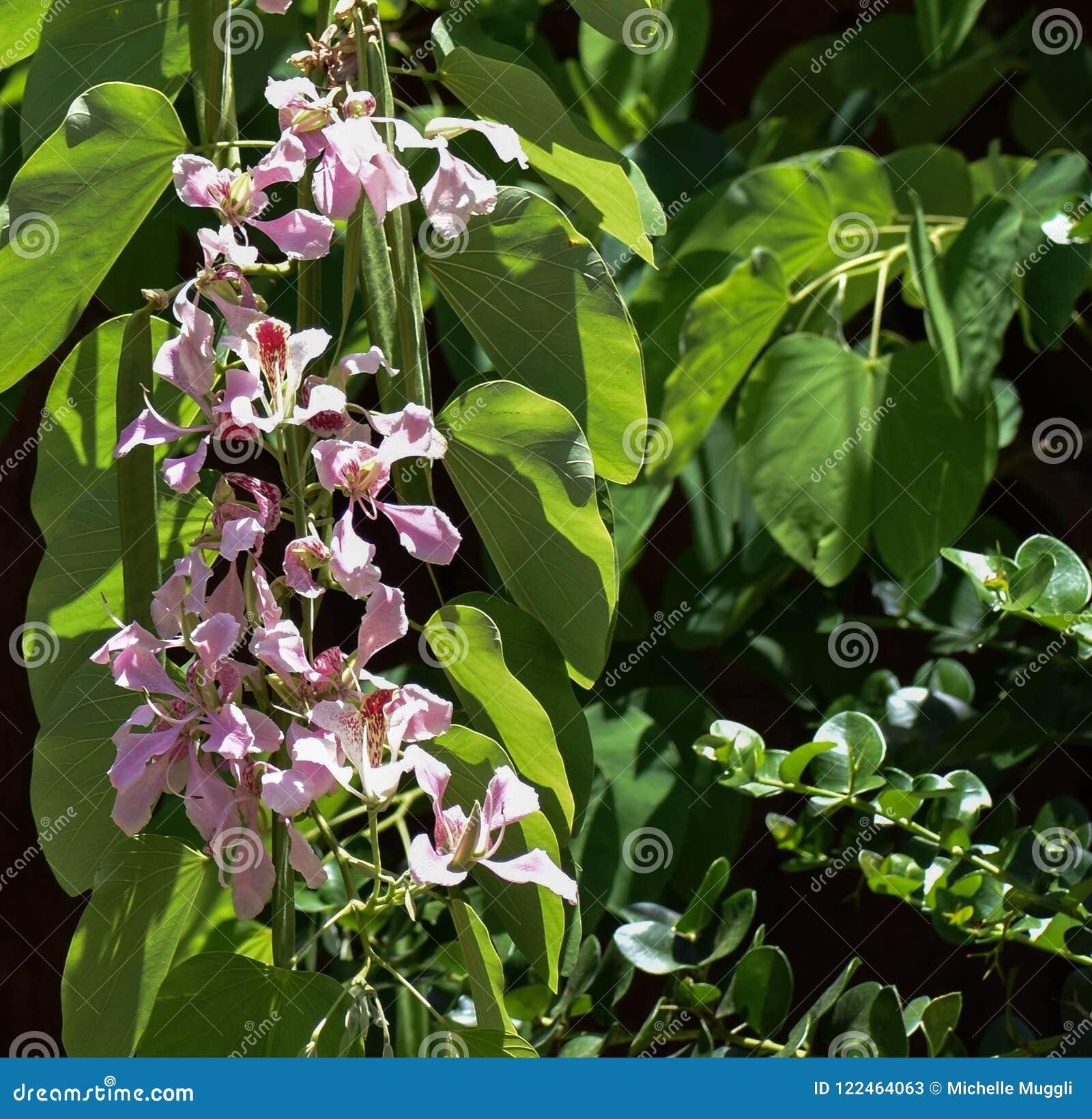 Hawaiian Hanging Tropical Flowers Stock Image Image Of Flower
