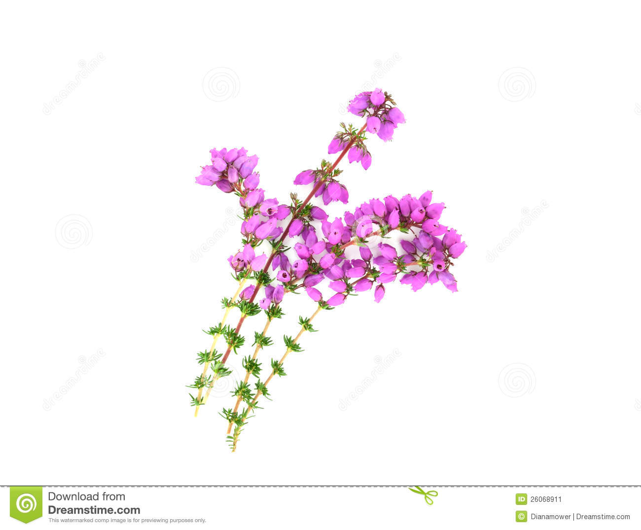 Purple Flower Clipart