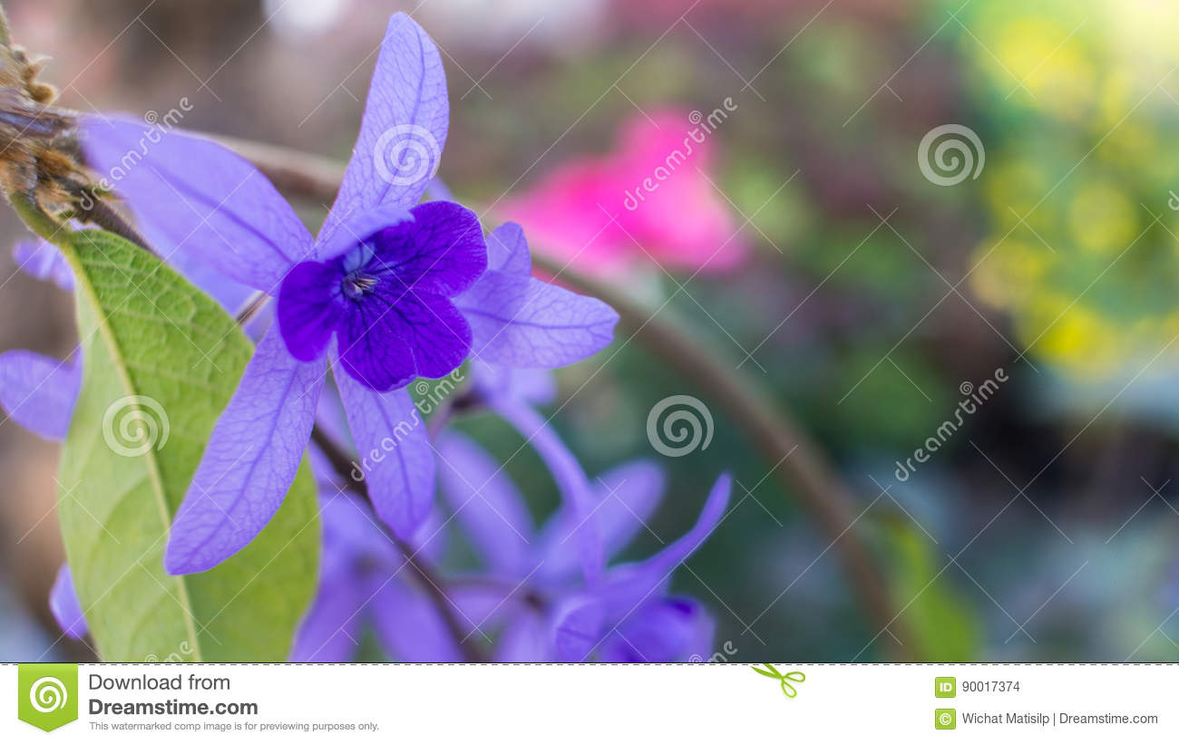The purple ivy flower blooming stock photo image of detail blue the purple ivy flower blooming izmirmasajfo