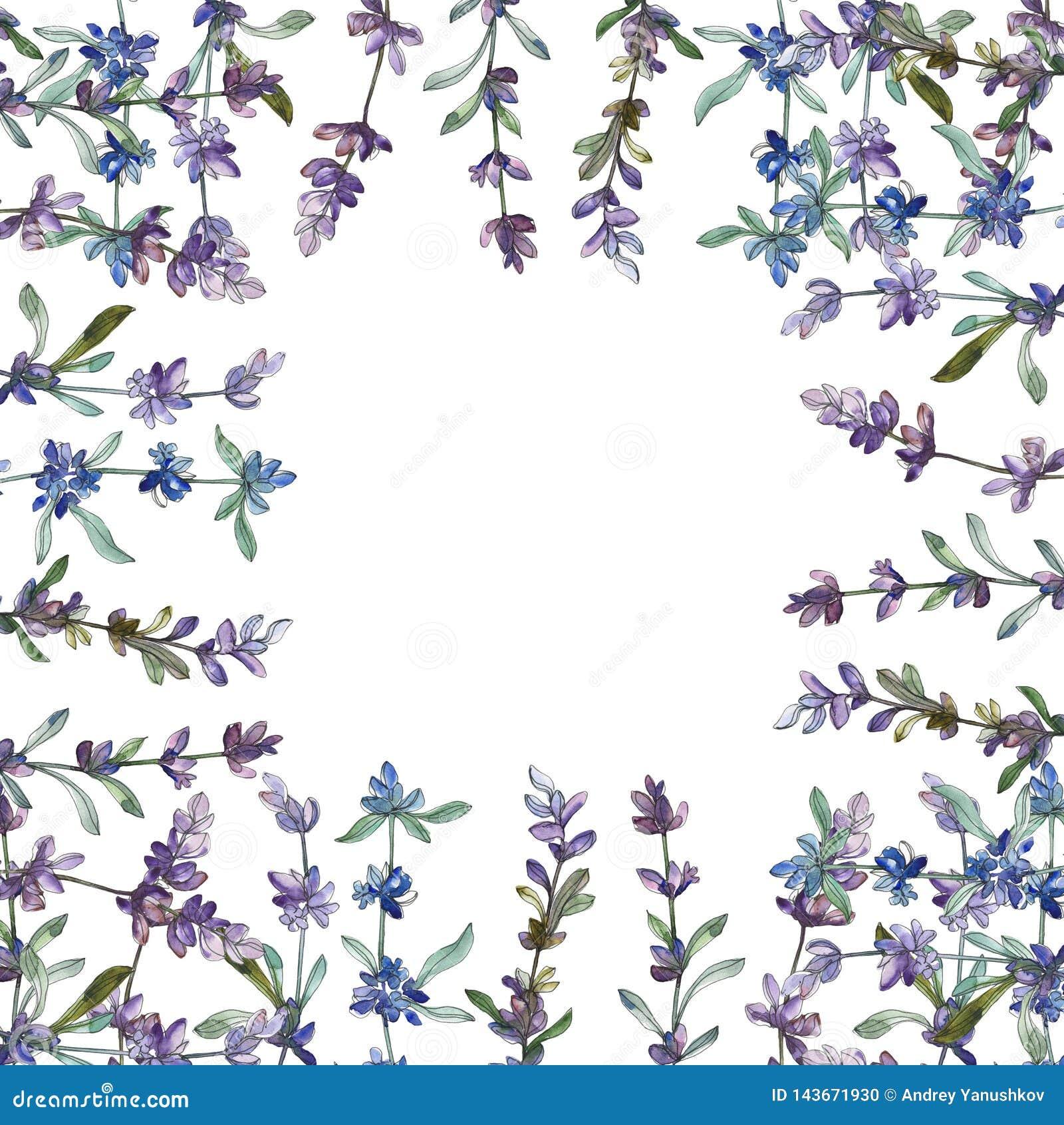 Purple lavender floral botanical flower. Watercolor background illustration set. Frame border ornament square.