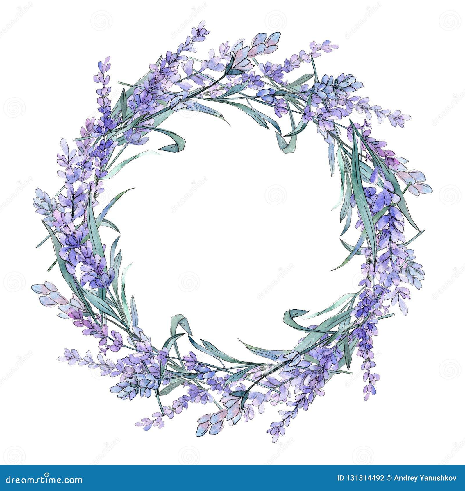 Purple lavender. Floral botanical flower. Wild spring leaf wildflower. Frame border ornament square.