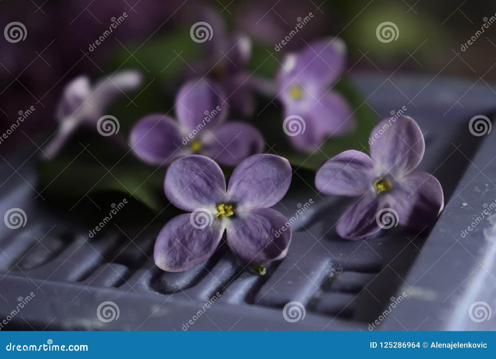 Purple Lilac Petals On Soap Stock Photo Image Of Purple Picture