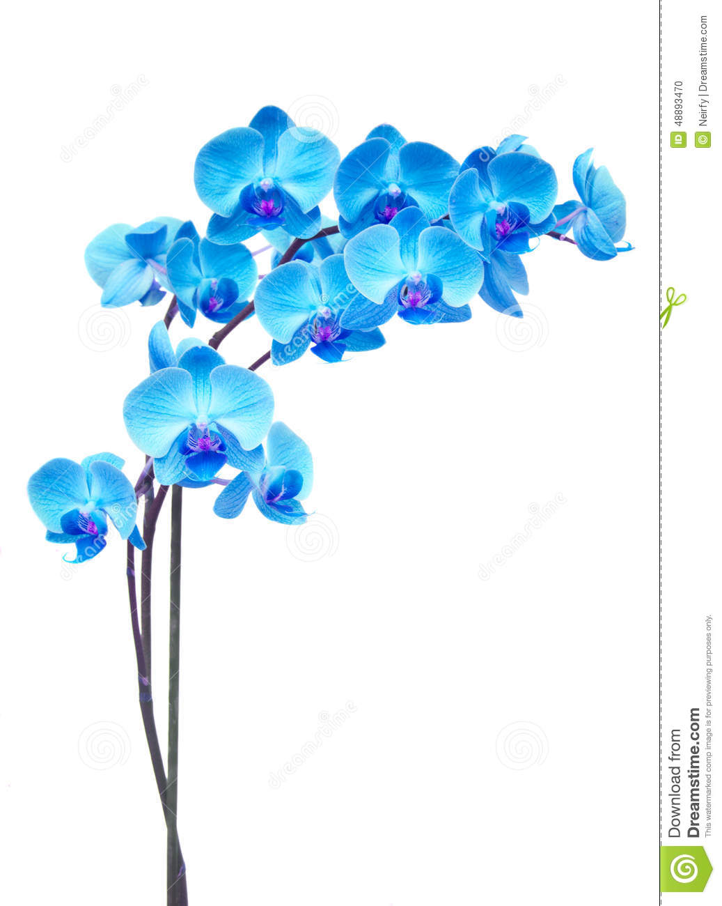 Purple orchid branch stock photo. Image of leaf, petal ...