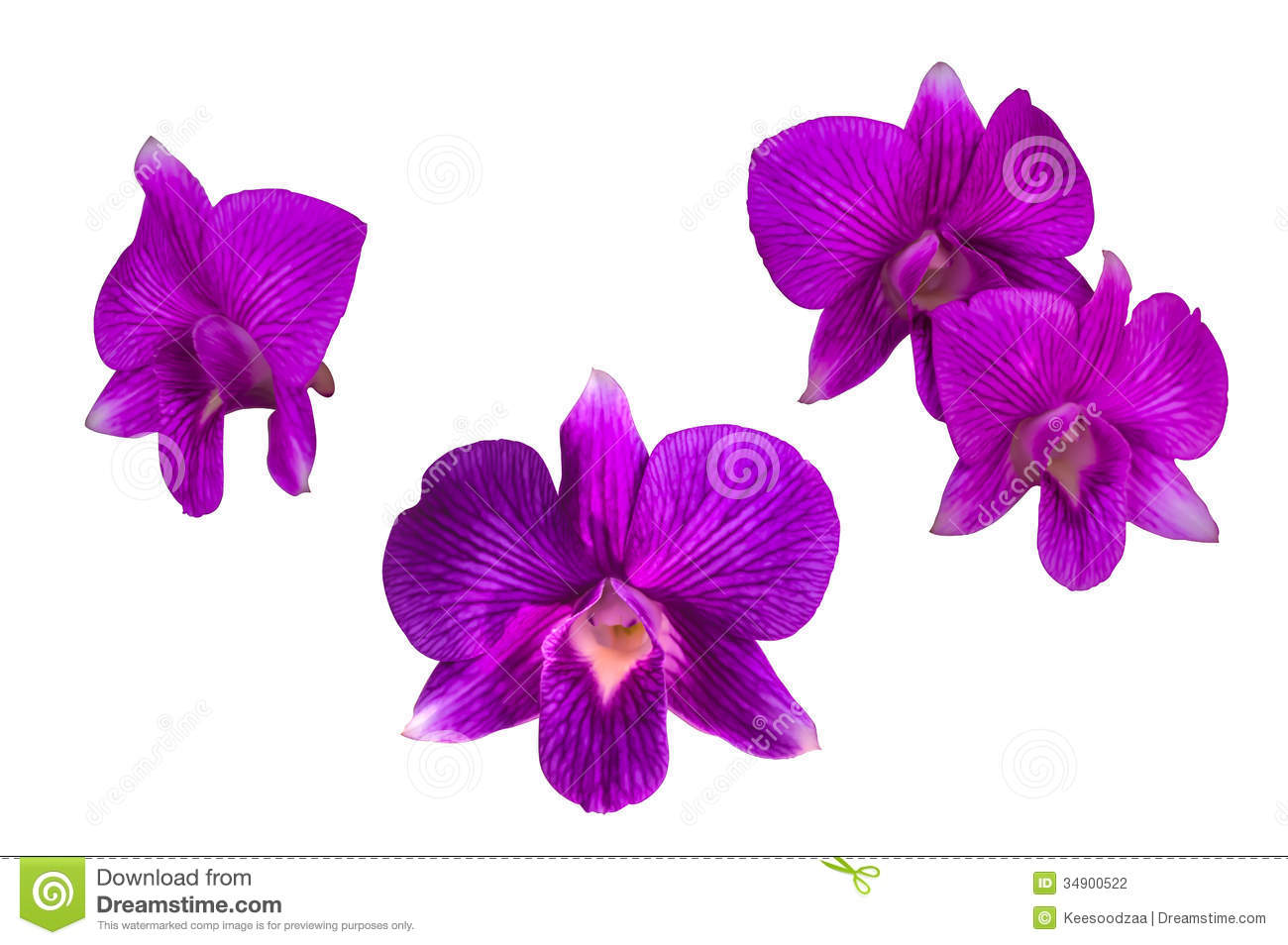 Purple Orchid Flower Stock Photo Image Of Delicate Bloom 34900522