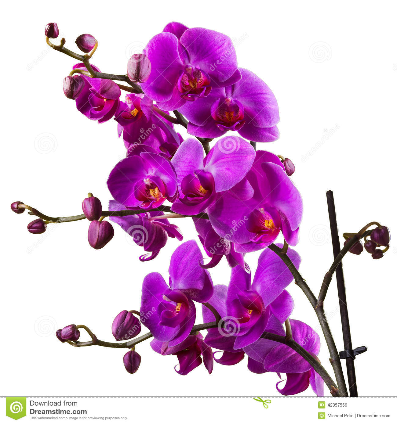 Orchid – The It' Color For Spring
