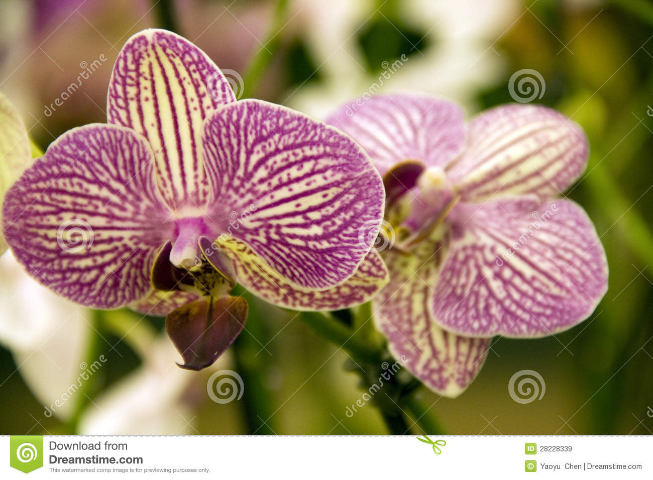 Purple orchid flowers