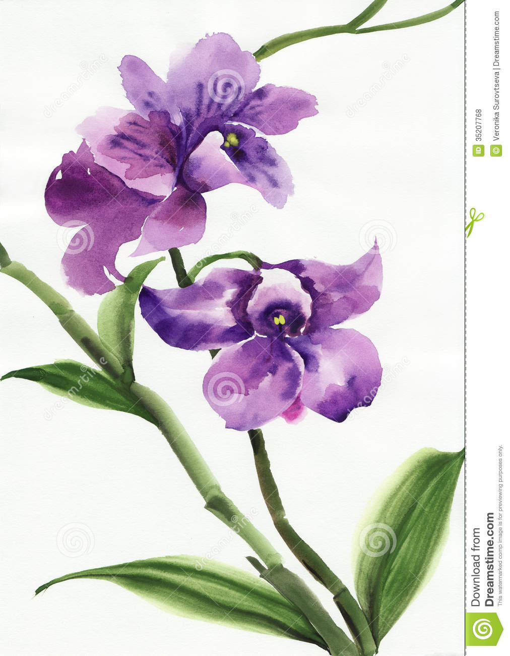 Purple Orchid Drawing