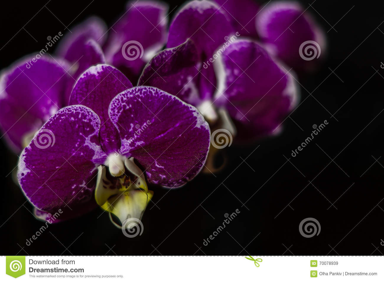 Mysterious flowers - black orchids