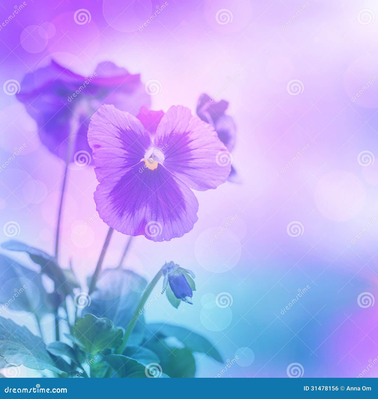 Purple pansies flowers stock photo. Image of lilac, flowers - 31478156