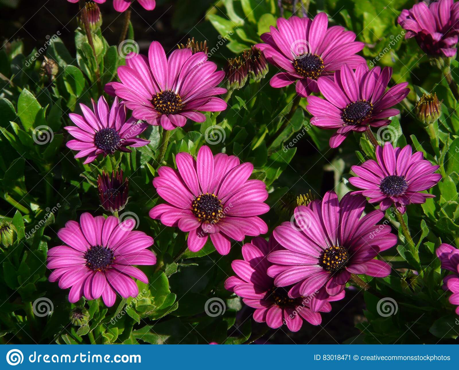 Download Purple Petal Flowers During Daytime Stock Image - Image of purple, flowers: 83018471