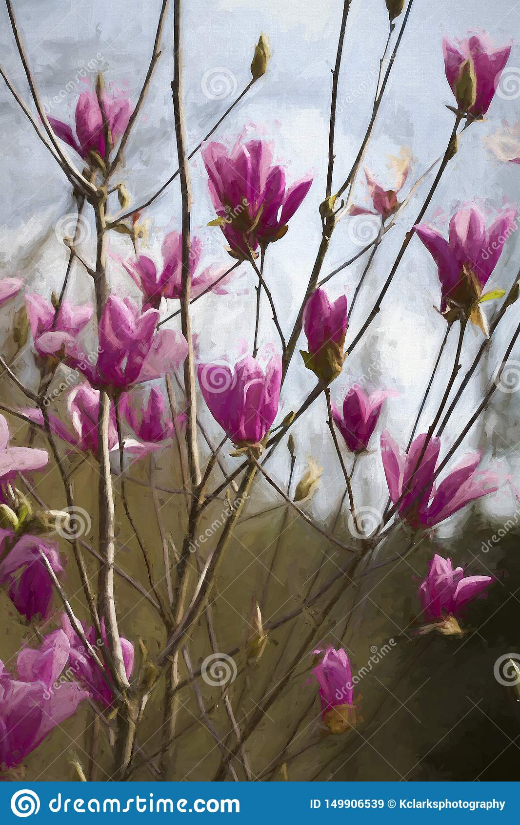 Purple Pink Saucer Magnolia Blossoms Digitally Painted Stock Image
