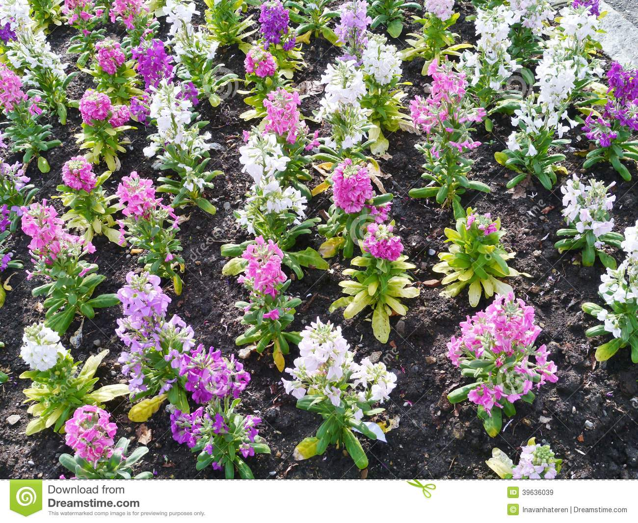 Purple Pink And White Spring Flowers Stock Image Image Of