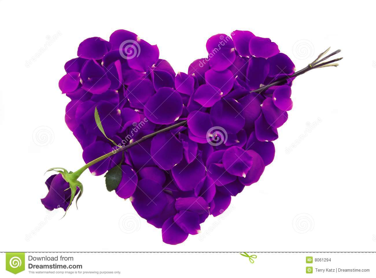 purple rose petal heart with arrow stock photo image of dating
