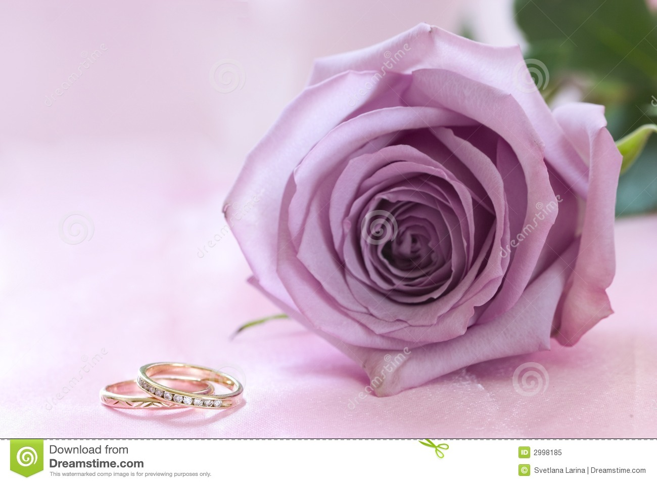 Purple Rose And Wedding Rings