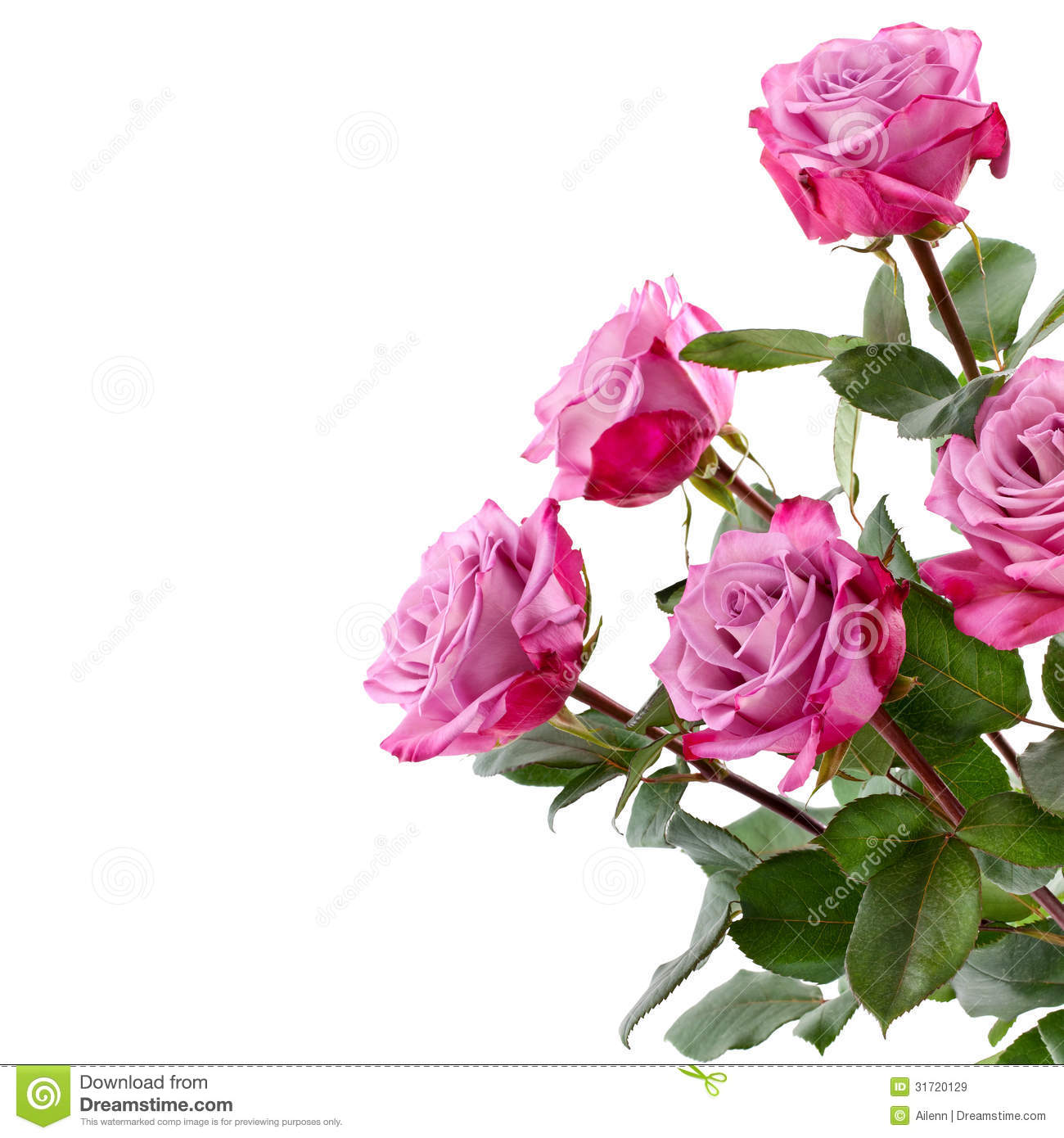 Purple Roses Bouquet On A White Background Stock Image ...