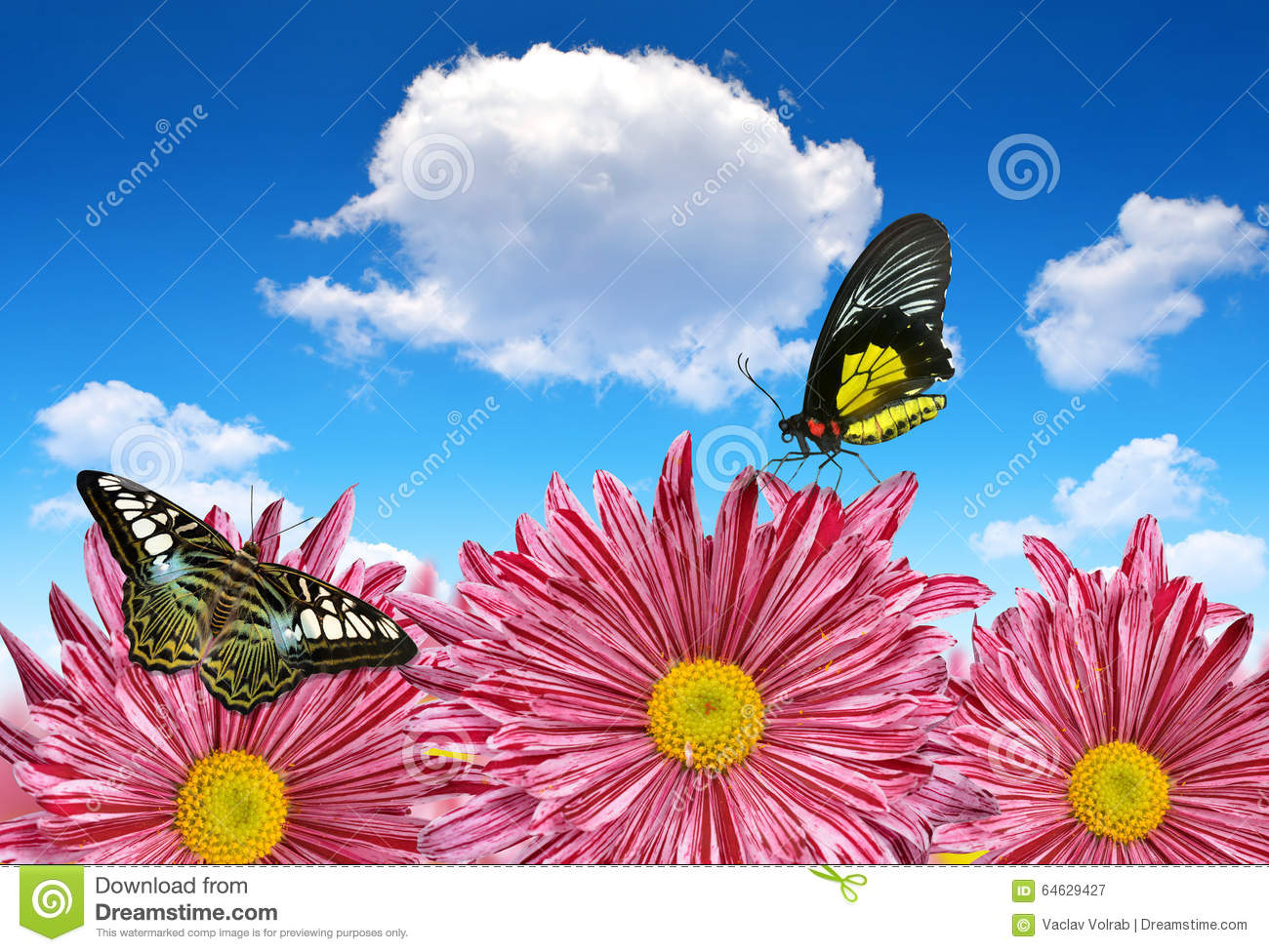 Purple Spring Flowers With Butterflies Stock Image Image Of Garden
