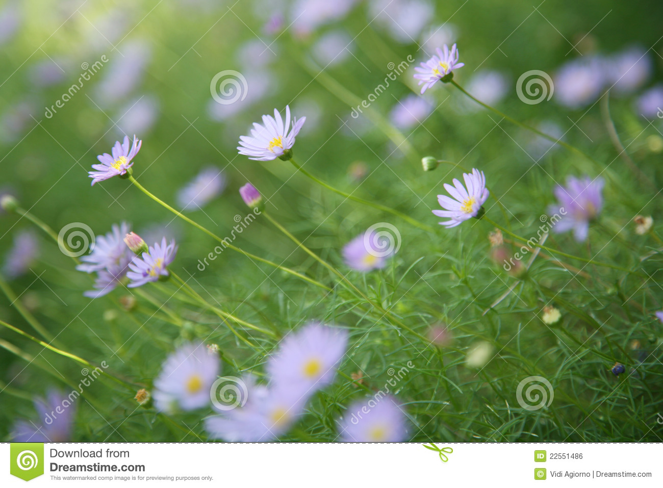 lavender colored wildflowers - photo #31