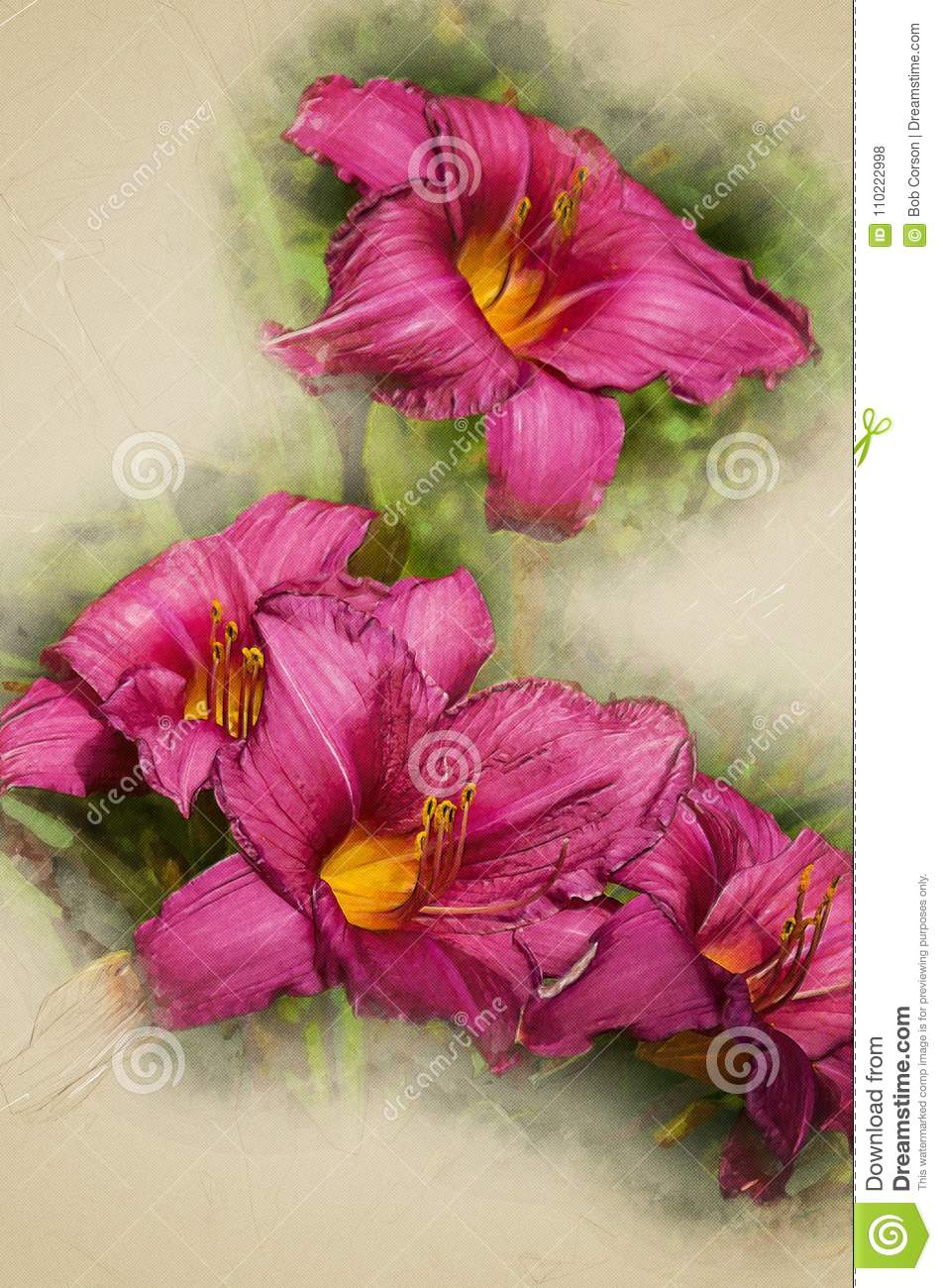 Purple Stella Doro Day Lily Flowers Stock Photo Image Of Bedding