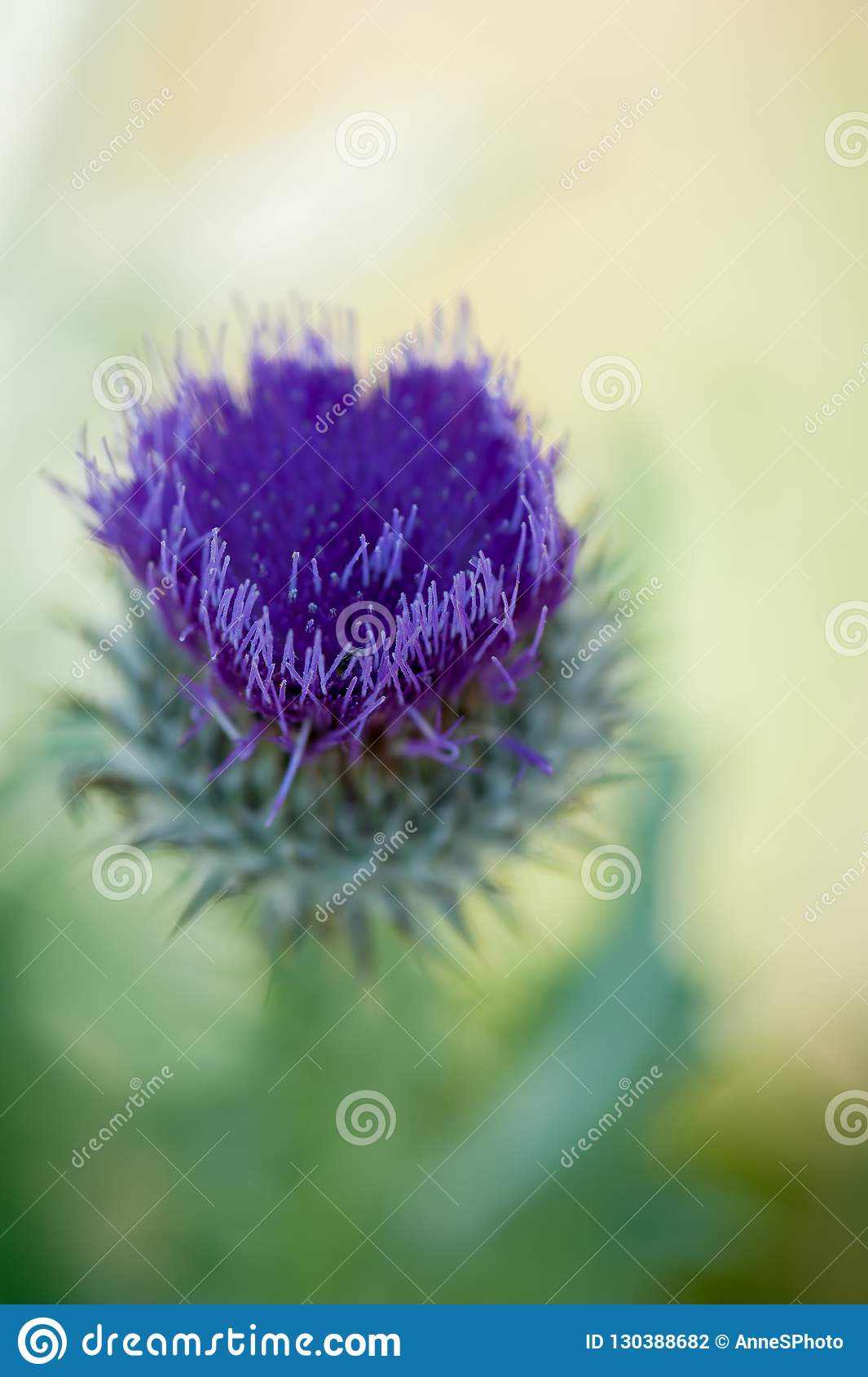 Purple thistle flower in the shape of a heart with shallow depth of field.