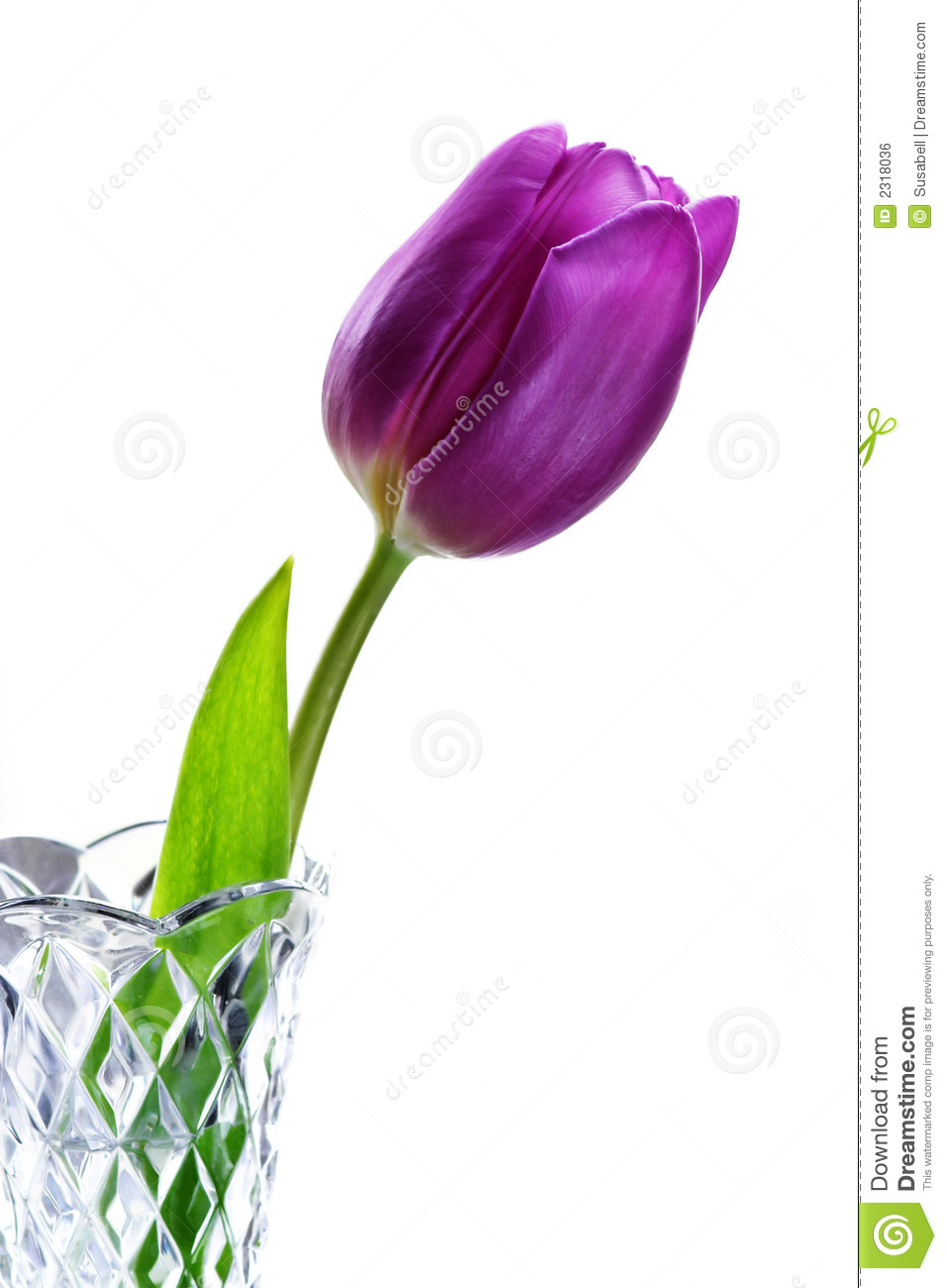 Purple Tulip In Vase Royalty Free Stock Image Image 2318036
