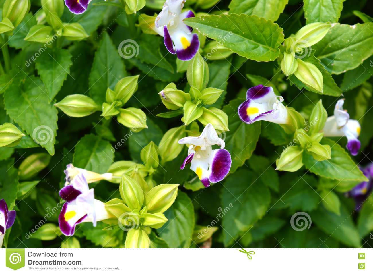 Purple White Flowers In A Garden Stock Photo Image Of Love