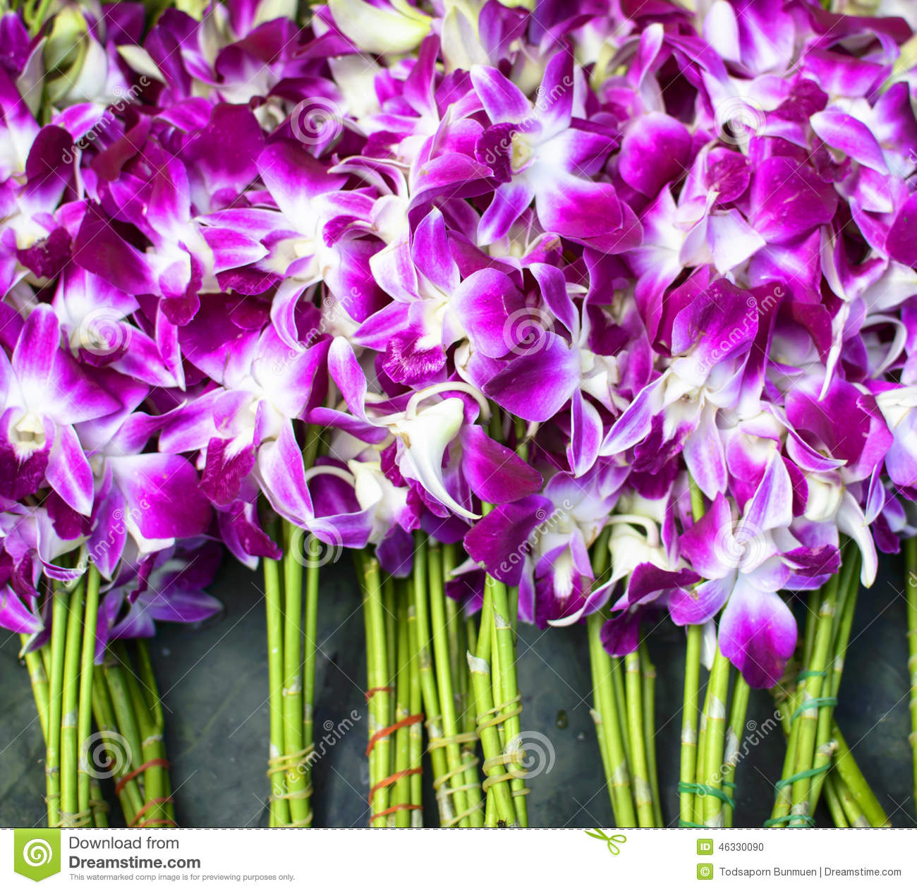 Purple And White Orchid Flowers Stock Photo Image Of Blossom