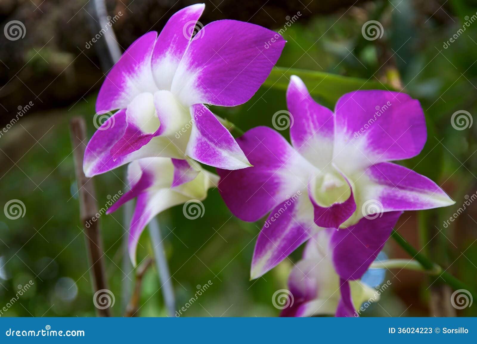 of purple white - photo #39