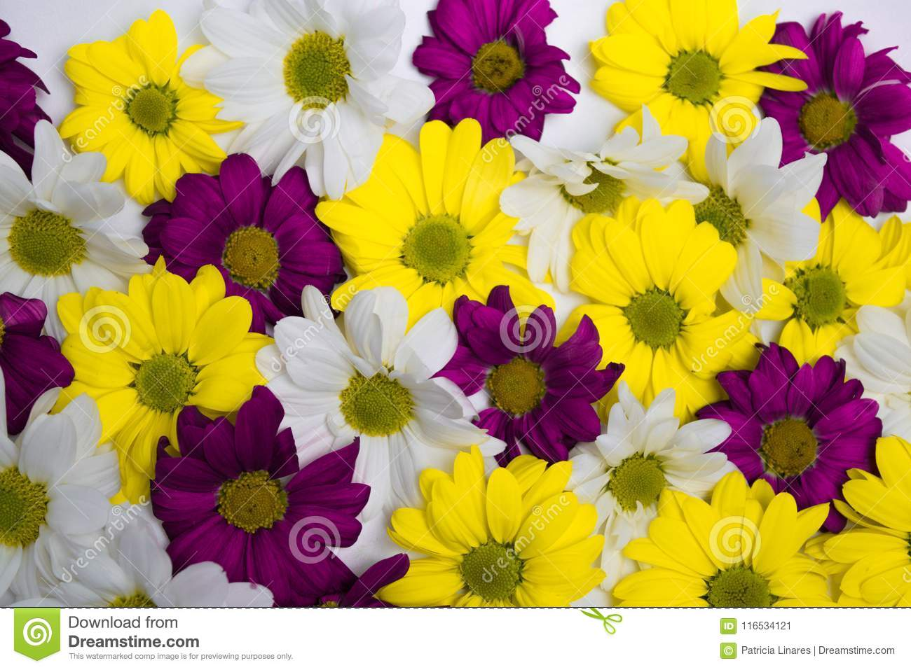Yellow,white And Purple Flowers. Stock Image , Image of pink