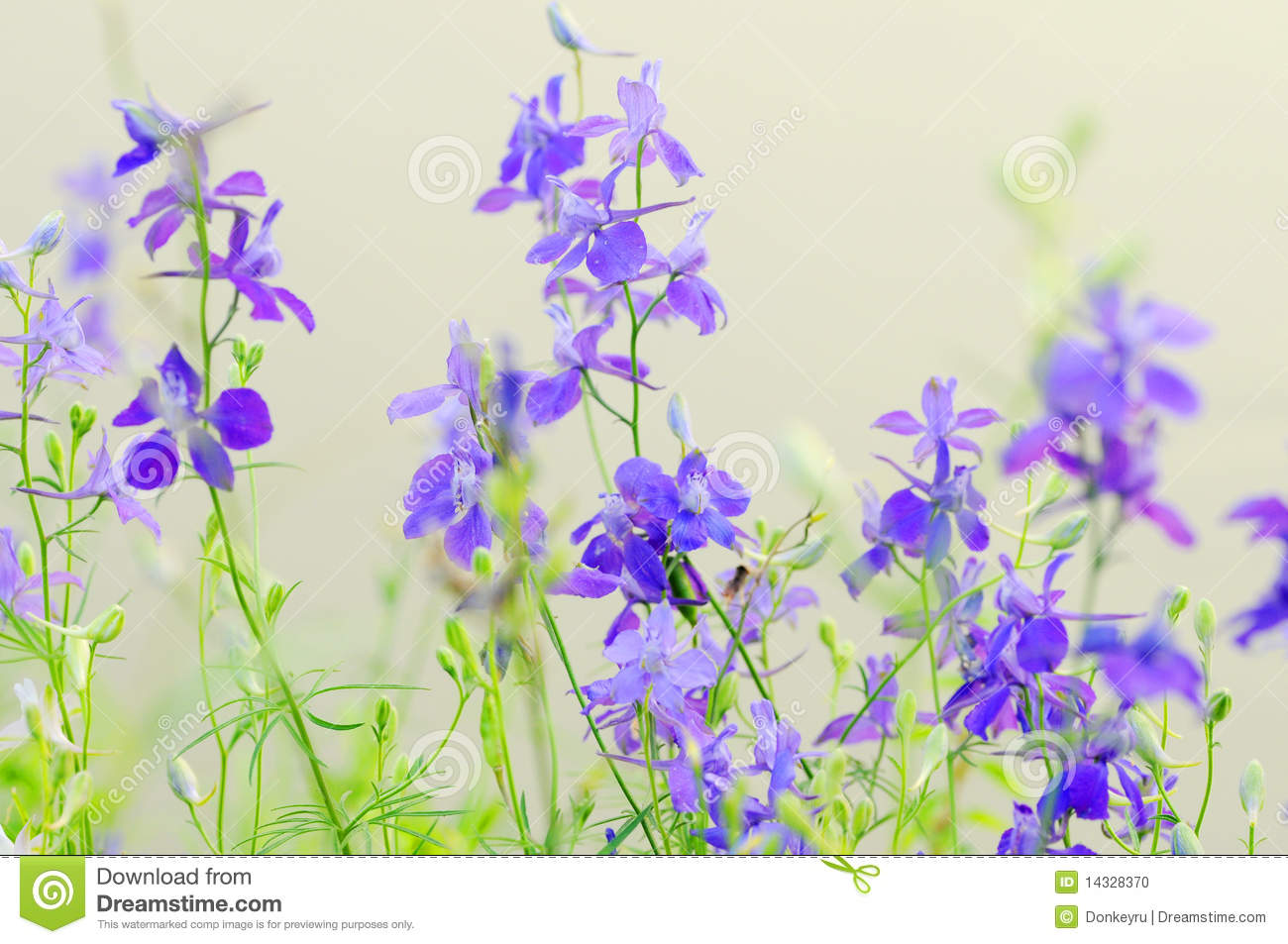 purple wild flowers stock photos  image, Beautiful flower