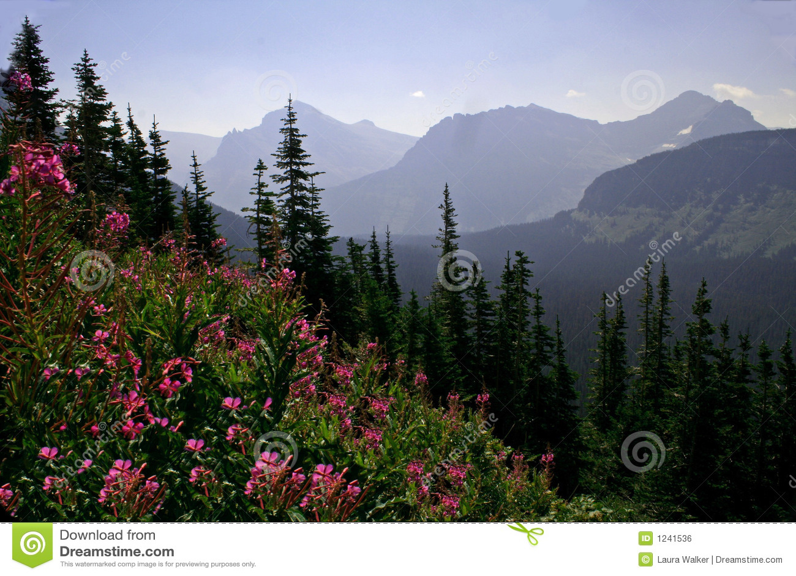 Purple Wildflower Mountain Landscape Stock Photo Image