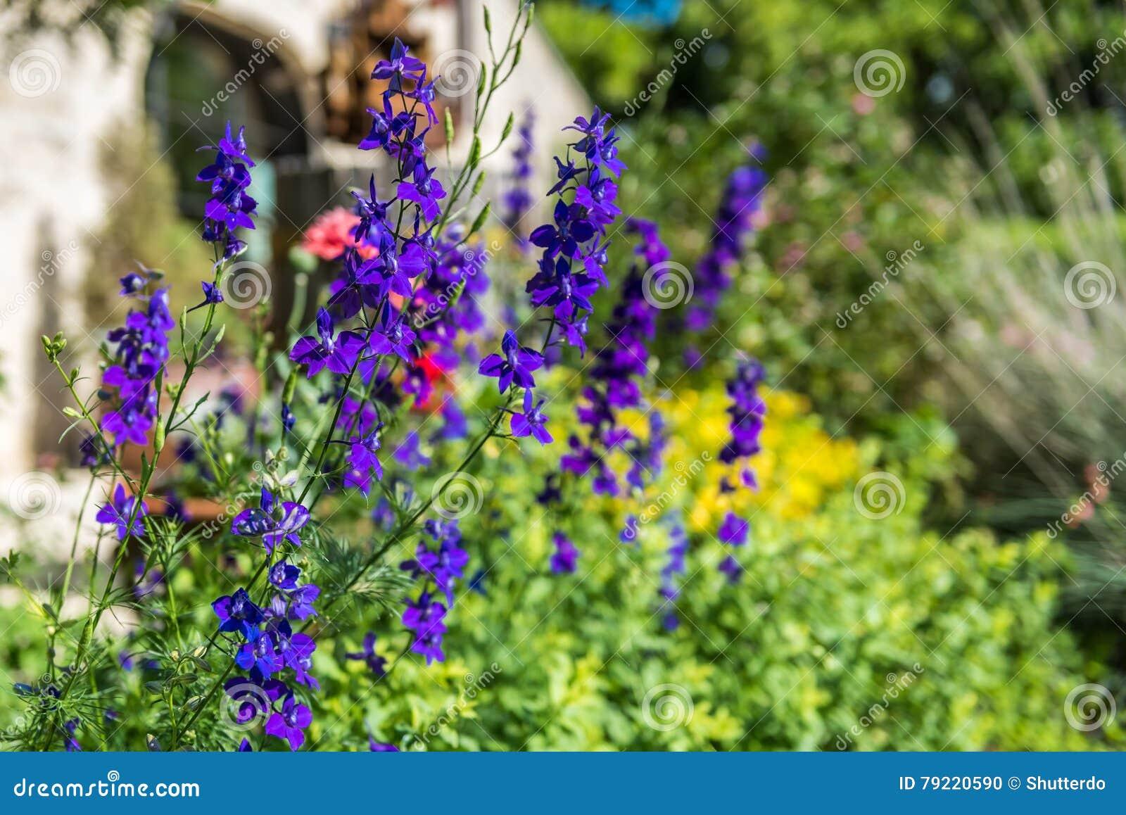 Purple wildflowers in Garden