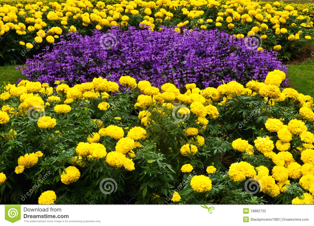 Purple And Yellow Flower Garden Stock Photography Image