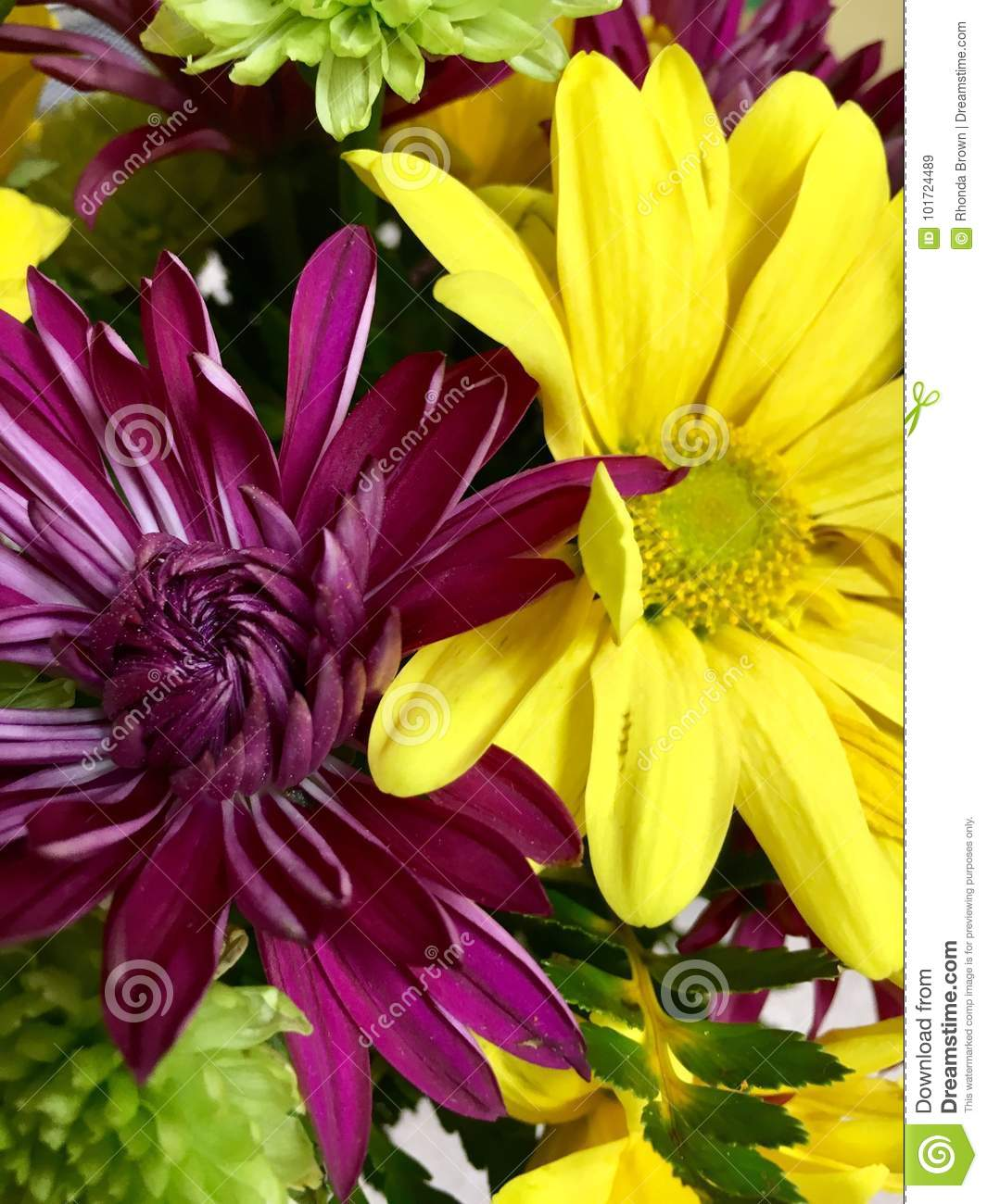 Purple Yellow Stock Image Image Of Purple Real Flower 101724489
