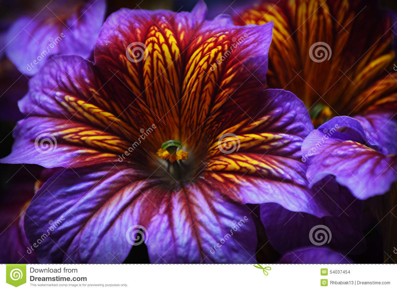 Purple and yellow tropical flower stock photo image of gardens purple and yellow tropical flower mightylinksfo